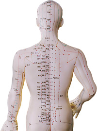 acupuncture is commonly used in conjunction with Chinese herbs